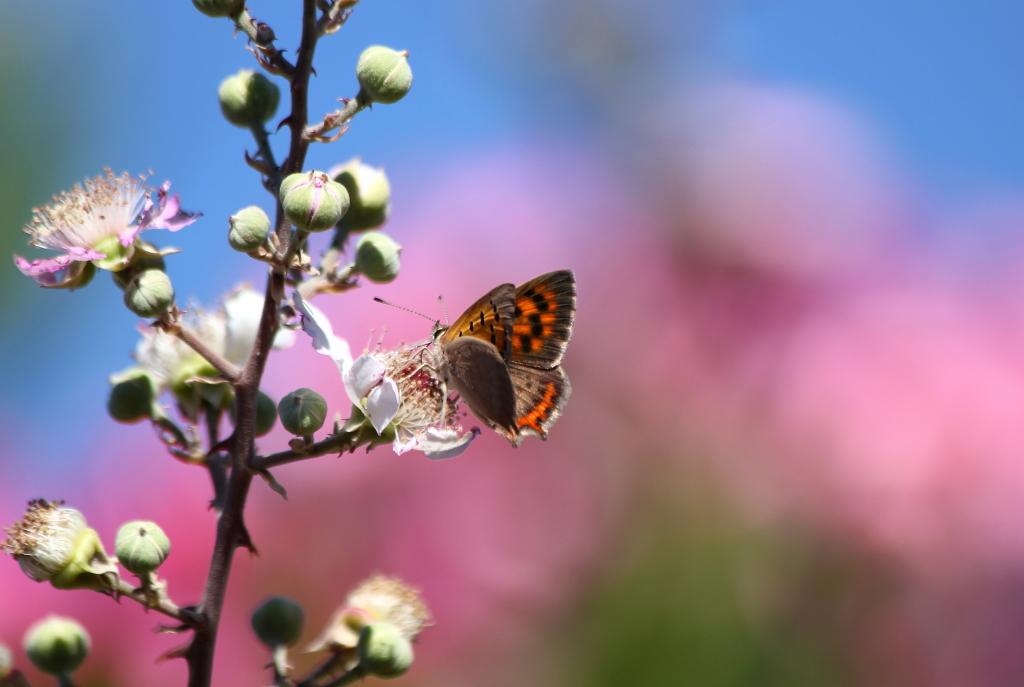 Taller de mariposas para empresarios en Andújar