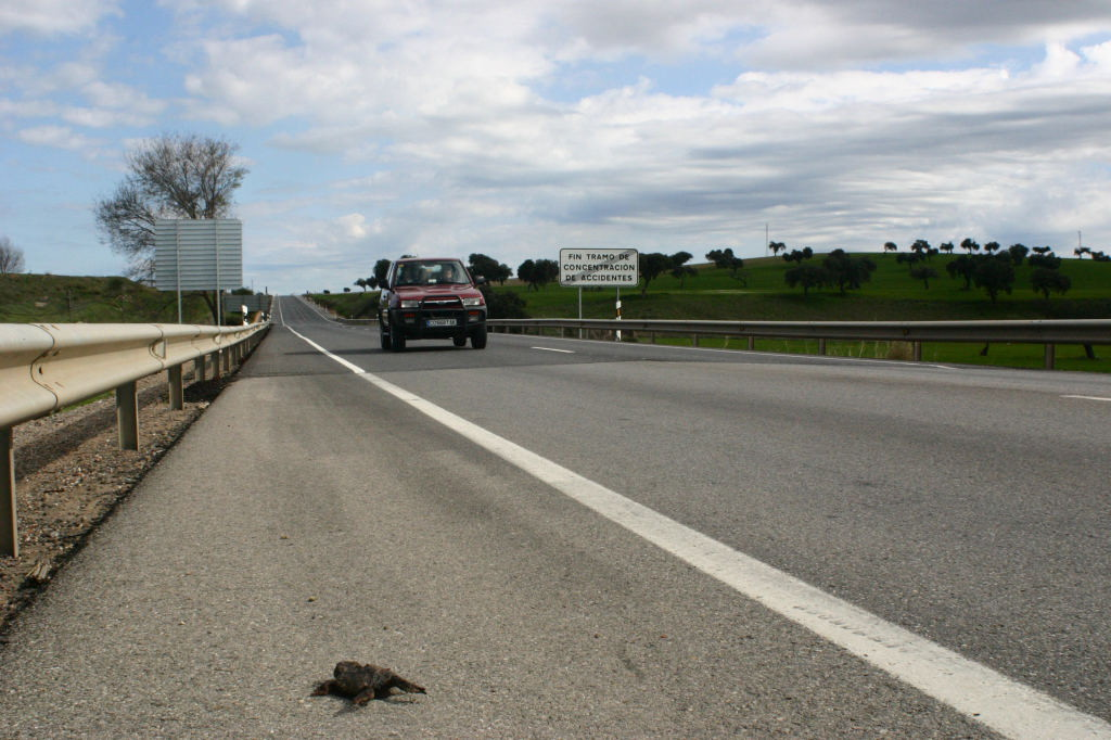Animales atropellados en la carretera