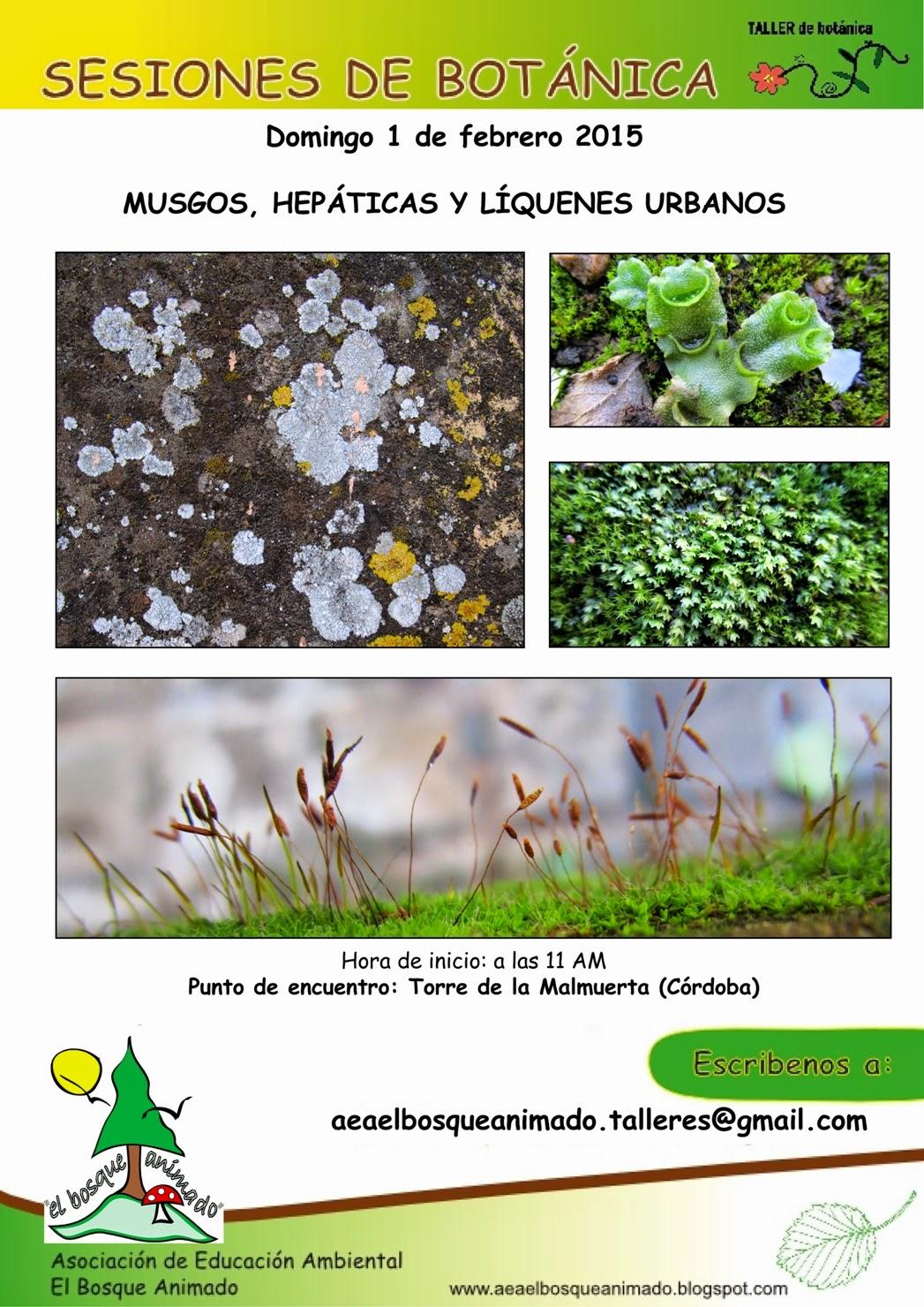 Febrero 2051: musgos, hepáticas y líquenes urbanos.