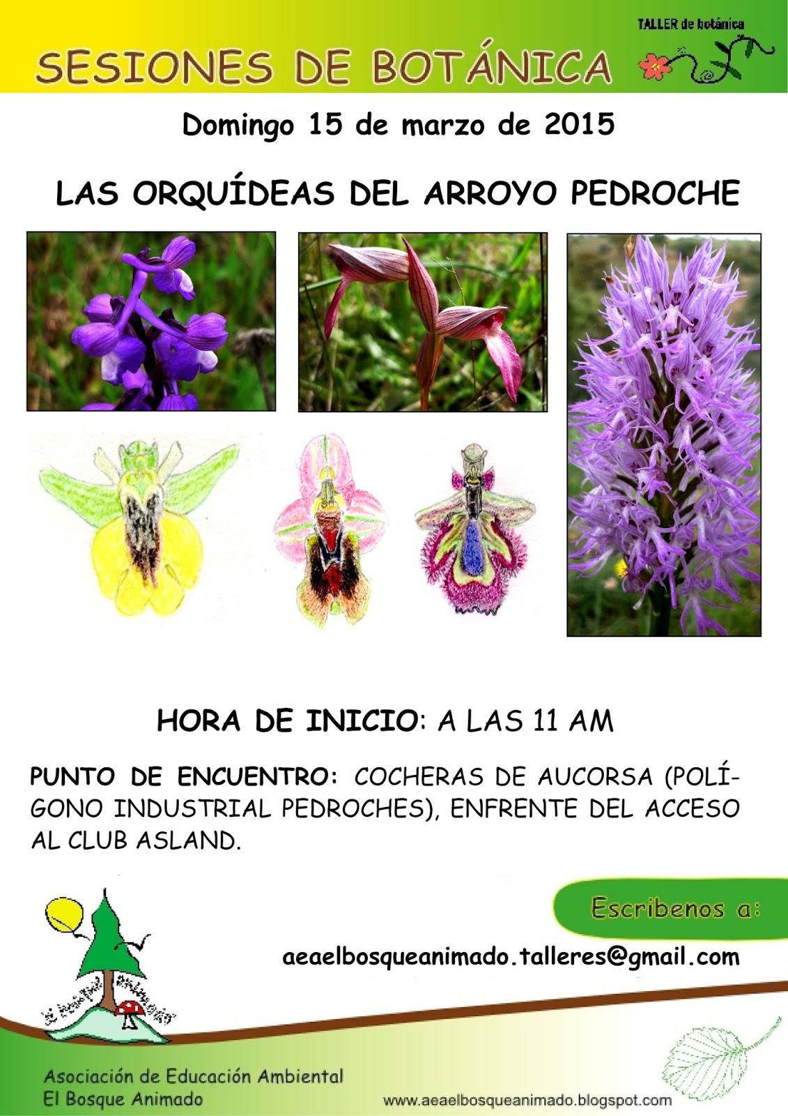 Marzo 2015: Las orquídeas del Arroyo Pedroche.
