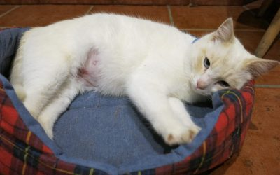 Apoyo a la castración de gatos callejeros
