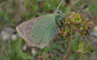 16-23 de mayo: la Gran Semana de la biodiversidad