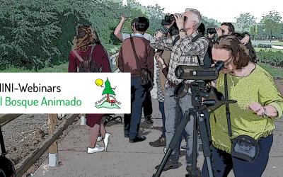 12 de mayo: Mini Webinars AEA Bosque Animado